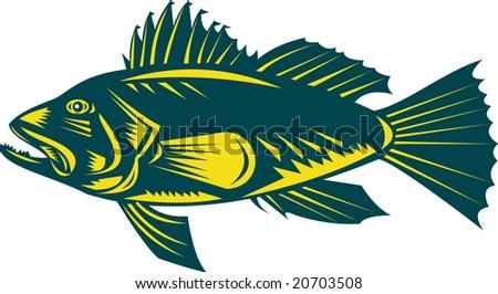 Sea bass side profile view - stock photo