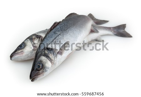 Sea basses isolated on white background with clipping path