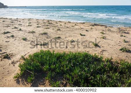Sea beach panorama full of coastal flora. Grassy sea beach. Sandy beach full of plants. White sand sea beach with grass. Summer time sea beach. Summer time sea beach landscape. Sea beach landscape. - stock photo