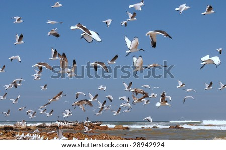 Flock gull fly over garbage stock photo 2766711 shutterstock for Apache mexican cuisine galveston