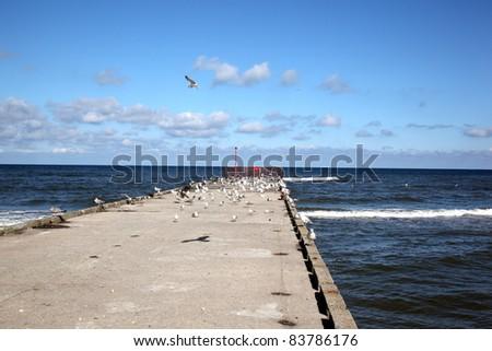Sea bird seagull on the pier. Baltic Sea, Poland, Europe - stock photo