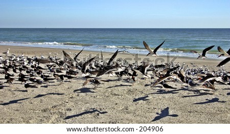 sea birds on the beach