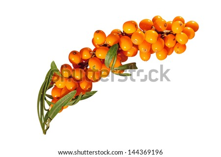 Sea-buckthorn berries - stock photo