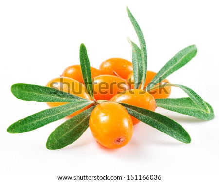 Sea buckthorn isolated on the white - stock photo