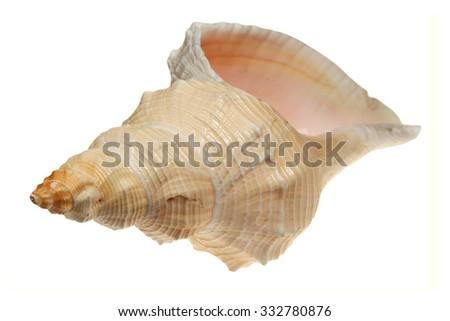 Sea cockleshell iolirovano on a white background - stock photo