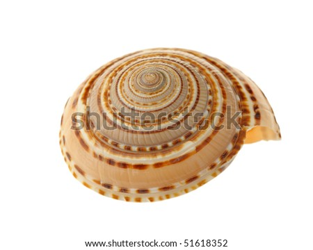 Sea cockleshell. It is isolated on a white background. - stock photo