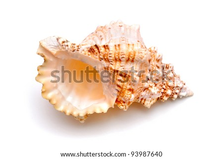 Sea cockleshell on a white background - stock photo