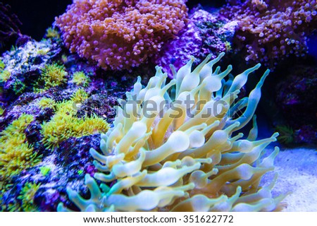 sea corals - stock photo