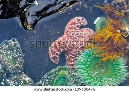 Sea Creatures on the coast of Vancouver Island BC Canada - stock photo