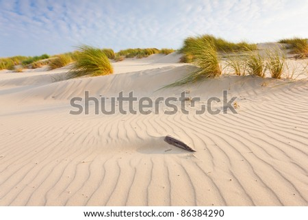 Sea dunes - stock photo