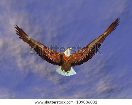 Sea Eagle Computer generated 3D illustration - stock photo