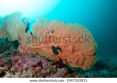 Sea fan coral maldives stock photo download now 1047503815 sea fan coral maldives publicscrutiny Choice Image