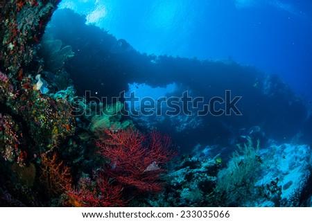 Sea fan Melithaea and sea fan Subergorgia suberosa in Banda, Indonesia underwater photo. Subergorgia has red color and Melithaea has orange color. - stock photo