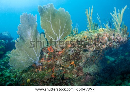Sea Fans and Sea Rods on a coral ledge in south east Florida. - stock photo