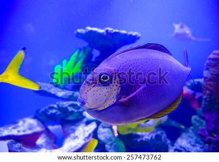 Fish in the sea free dating