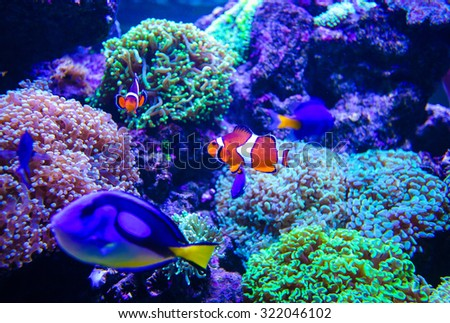 sea fish and corals - stock photo