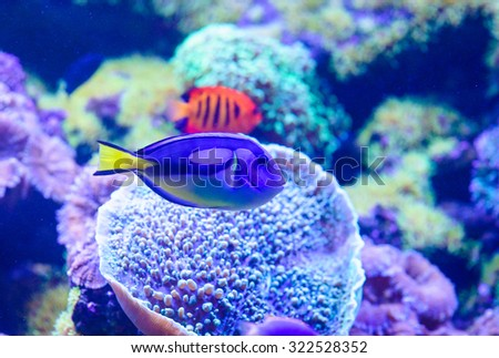 sea fish and corals