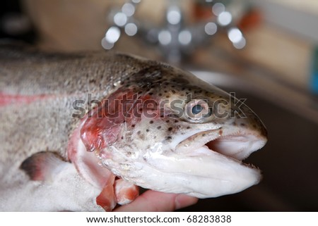 Sea fish isolated on dark background.