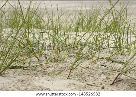 Sea grass on the coast of the North Sea in the Netherlands