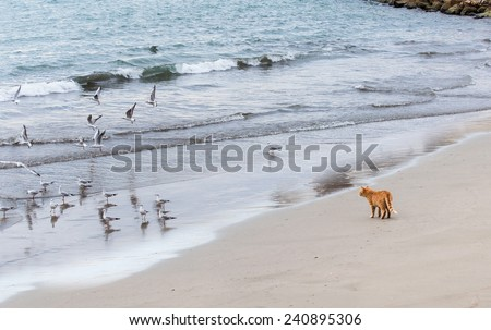 Sea gull birds standing on the sand beach and  cat is watching them - stock photo