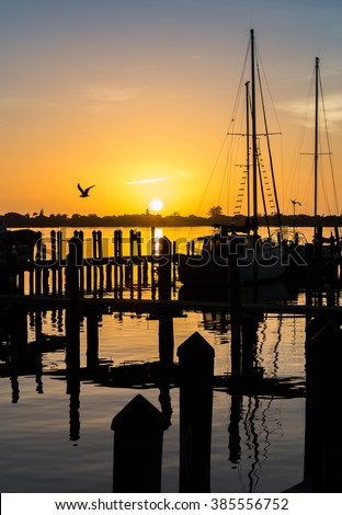 Sea Gull flies in front of sunset at Englewood Marina at sunset. - stock photo