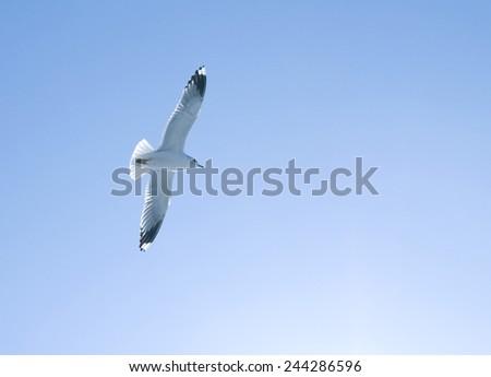 Sea gull on blue sky background. - stock photo