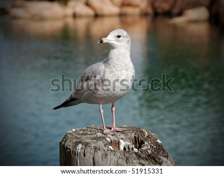 Sea gull standing on a pole in a harbor