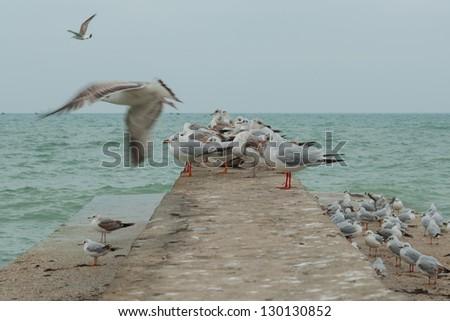 Sea gulls on the pier - stock photo
