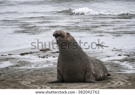 Sea Lion at the Beach in Southern California, USA