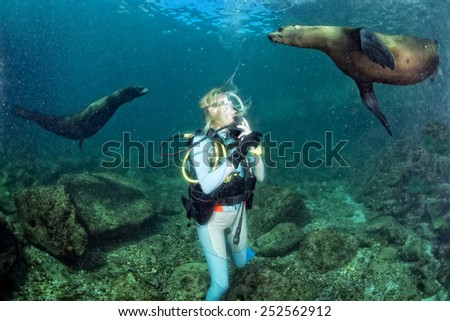 sea lion seal coming to blonde diver girl underwater - stock photo