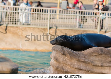 Sea lion sleeping and sunbathe on large stone in summer - stock photo