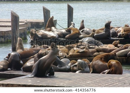 Sea lions at Pier 39, San Francisco, USA - stock photo