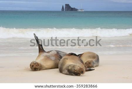 Sea Lions Galapagos - stock photo