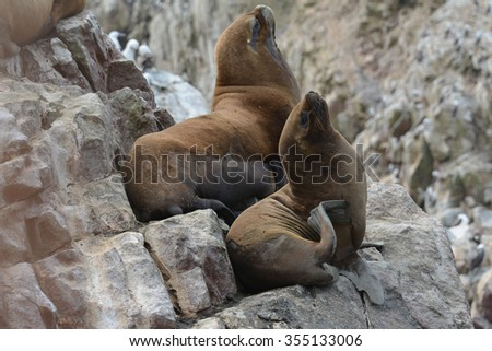 Sea lions relaxing on the rocks of the Ballestas Islands in the Paracas National park. Peru. - stock photo