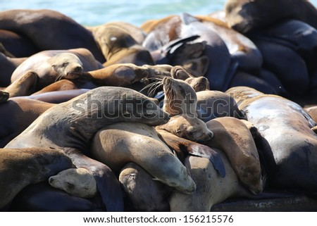 Sea Lions sleeping and basking in the warm sun - stock photo