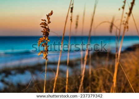 Sea oats at sunrise on beach - stock photo