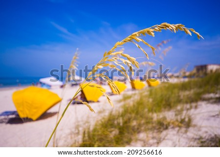 Sea Oats frame the sand on Madeira Beach with yellow sun shades in Florida on Gulf of Mexico - stock photo