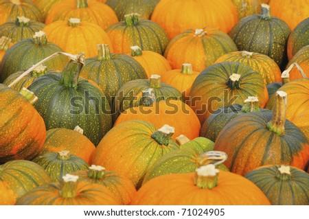 Sea of Pumpkins - stock photo