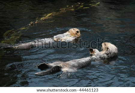 Sea-otters - stock photo