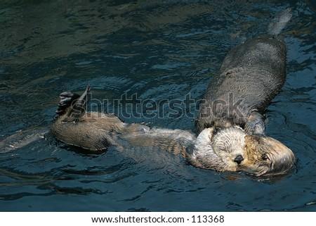Sea otters in Lisbon Oceanarium - stock photo