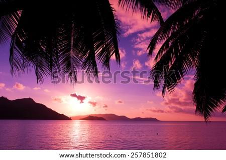 Sea Palm Sunrise  - stock photo