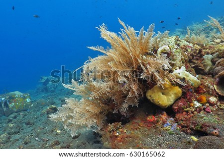 Sea plume (sea plant) on the coral reef with sandy seabed. Blue ocean background, detail of Gorgonian family coral underwater life.