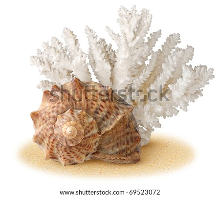 Sea shell and coral over sand - stock photo