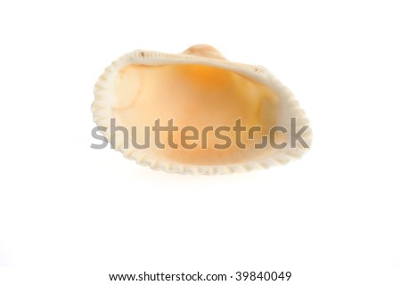 sea shell close up isolated on white background