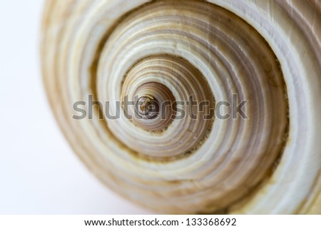 sea shell isolated - stock photo