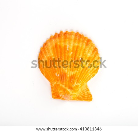 sea shell isolated