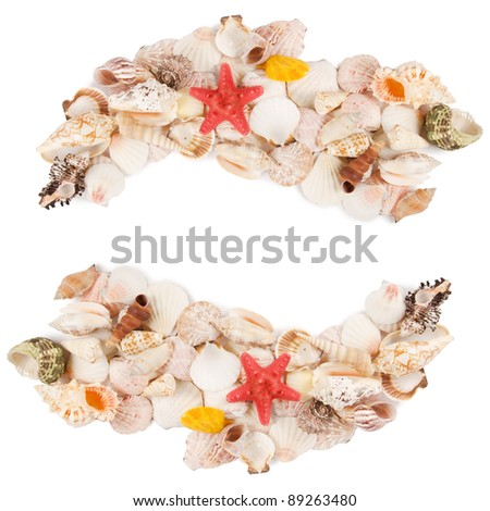 Sea shell isolated on a white background - stock photo