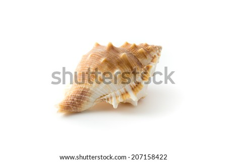 Sea Shell , isolated on white background - stock photo