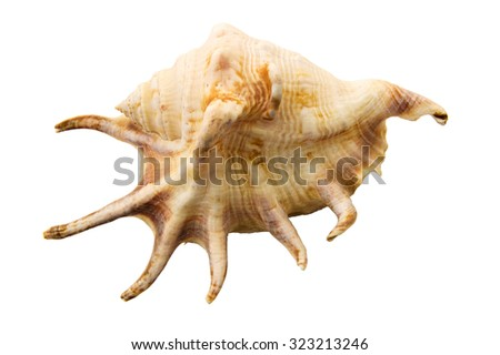 Sea shell isolated on white background. Shell, is a hard, protective outer layer created by an animal that lives in the sea. Empty seashells are often found washed up on beaches by beachcombers. - stock photo