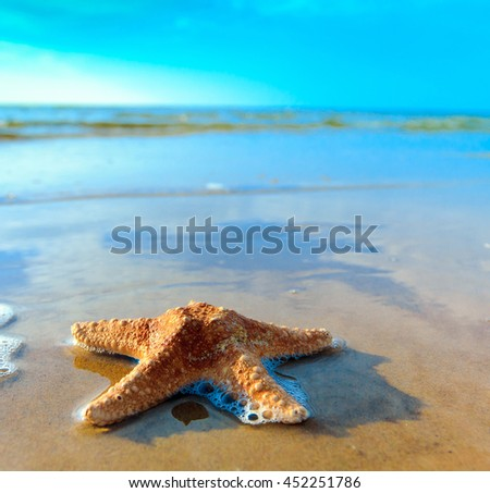 Sea Shell Landscape